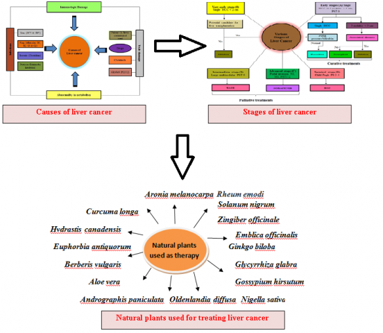 Updates on Traditional Medicinal Plants for Hepatocellular Carcinoma