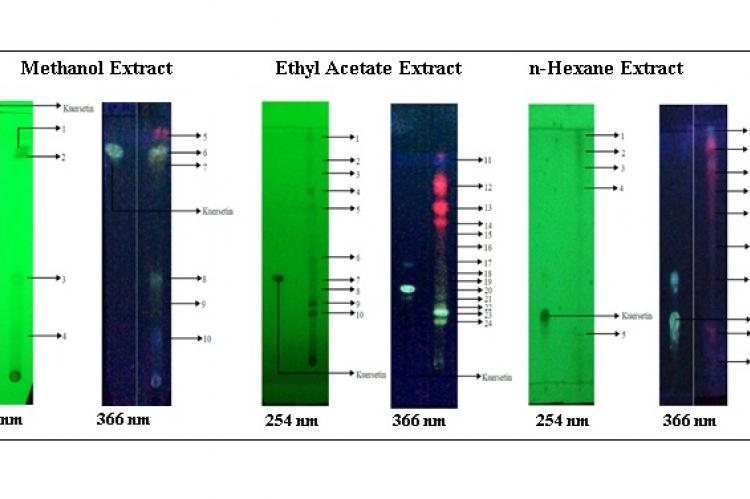 Chromatogram quercetin and Garciniakydia Roxb leaves extract.