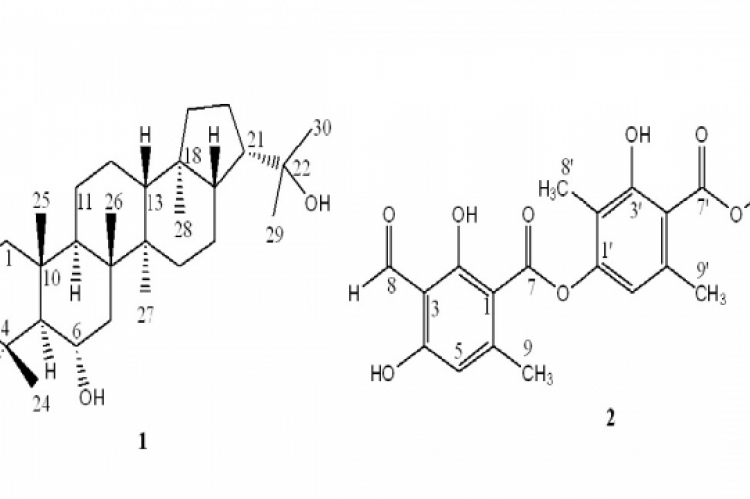 Chemical structures of zeorin (1) and atranorin (2).