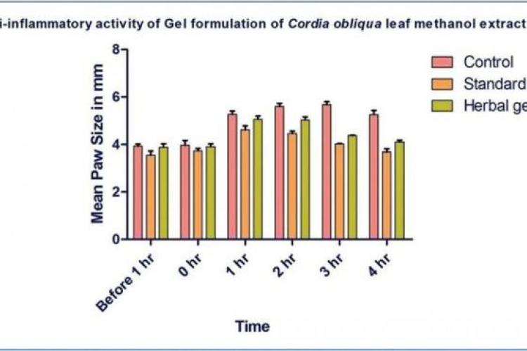 Anti-inflammatory activity study of Cordia obliqua topical gel.