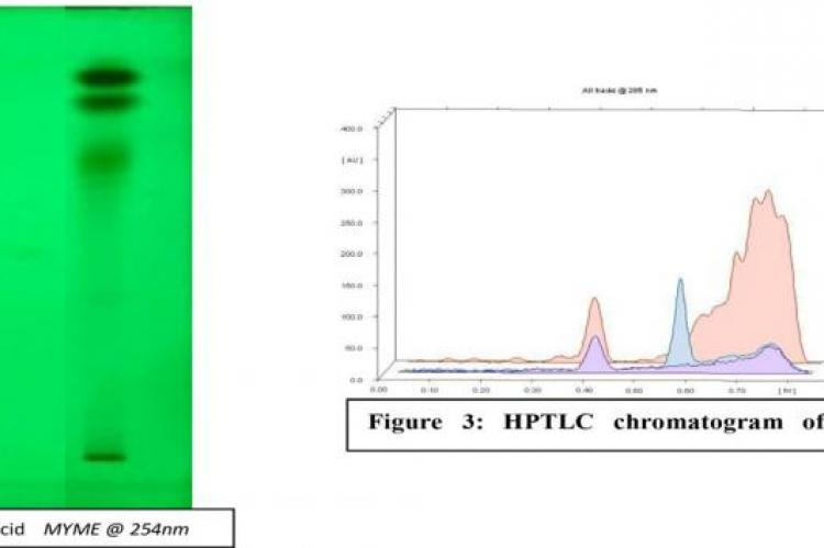 HPTLC Chromatogram of Plant Extracts showing different bands