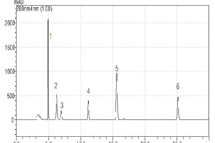 Showed chromatogram of standardized compounds (standard no.1= gallic acid, 2= catechin, 3= chlorogenic acid, 4= rutin, 5 = ferulic acid, 6= quercetin)