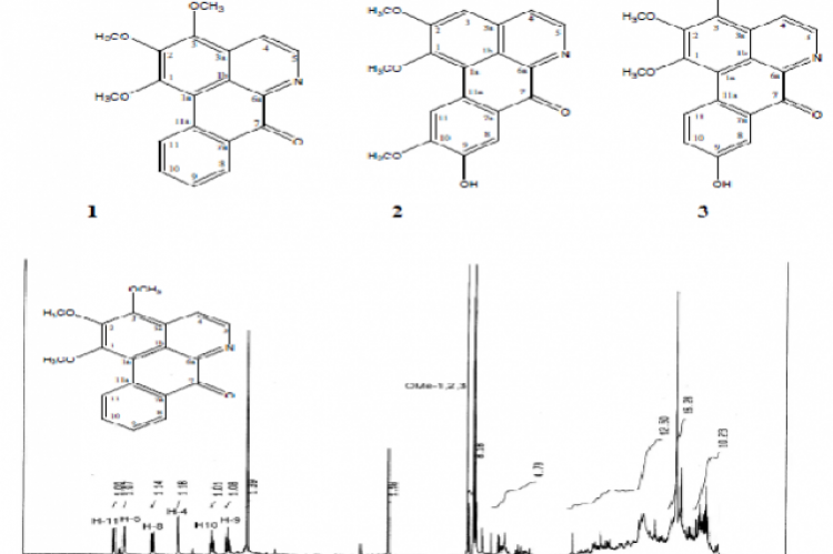 1H NMR spectrum of compound 1