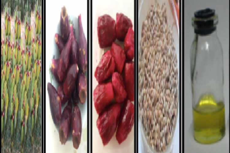 The Different plant tissue tested in the current study