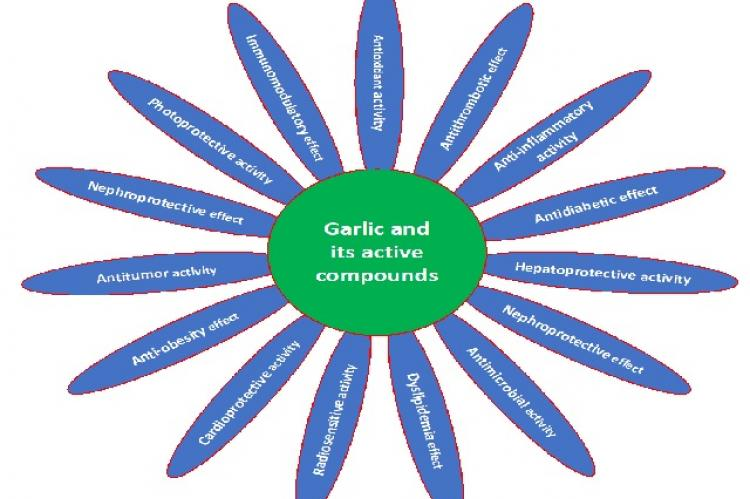 Role of garlic in the various types of disease's management