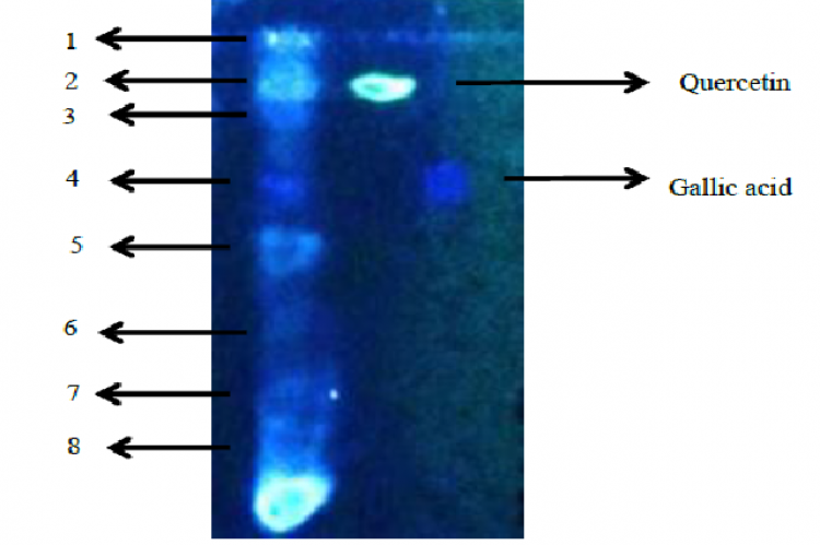 TLC spot of CyR extract