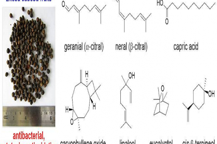 A High Antibacterial Efficacy of Fruits of Litsea cubeba (Lour.) Pers from Nepal. GC-MS and Antioxidative Capacity Analyses
