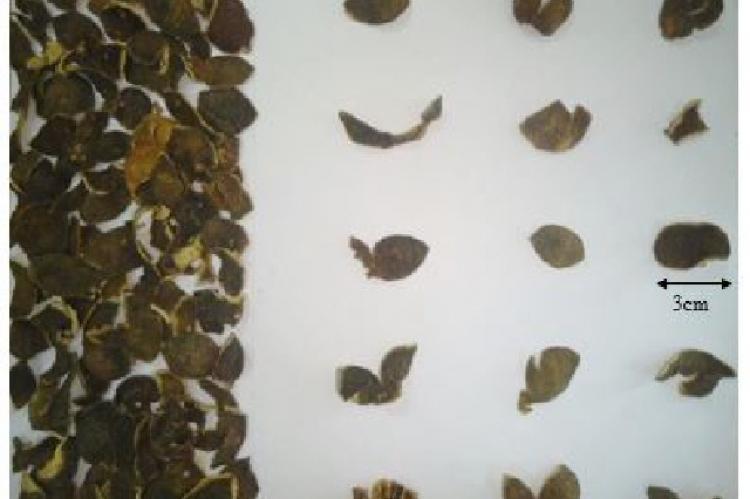 Macroscopic simplicia of calamondin peel