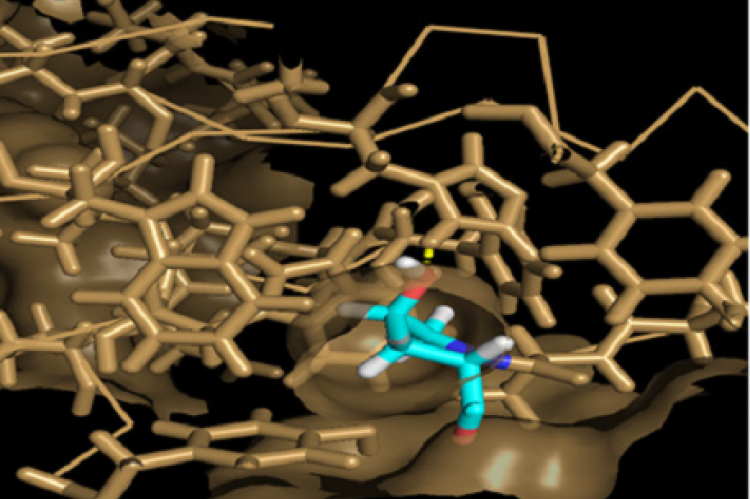 Molecular dynamics simulation of HIF with HTS 0115 molecule.