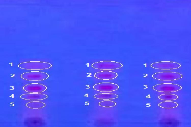 TLC profile of M. gigantea leaves ethanol extract; FA3 = Eudragit E100 Formula (15%); FB3 = Ethocel Formula 10 cP (15%) under UV light 366 nm