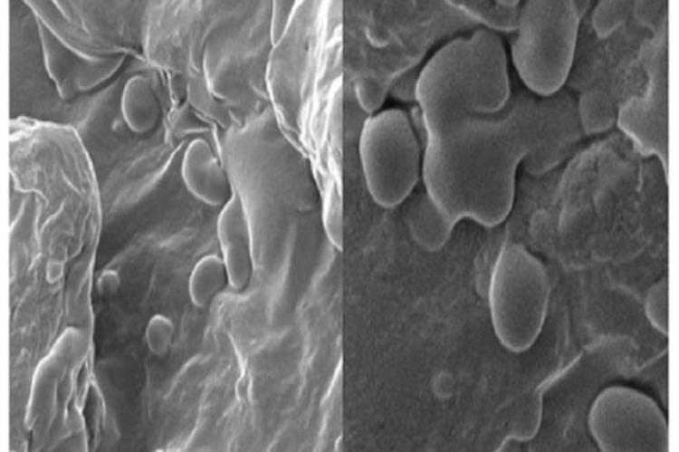 SEM micrograph for treated organic tomato sample