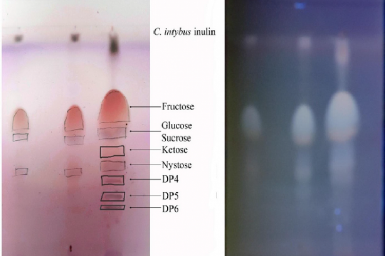 C 1 = 2 drops of CI extract, C 2 = 5 drops drops of CI extract and C 3 = 10 drops drops of CI extract. 10% ethanolic H2SO4 reagent was prepared for the detection method, the plate was then put in the oven to dry at a temperature of 115oC for 15 minutes. The detection was in the UV light 365 nm