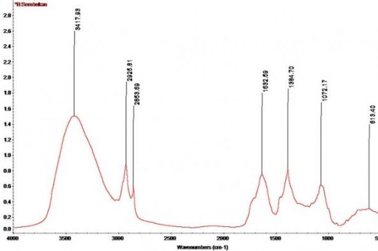 IR spectra of Paederia foetida stem extracts.
