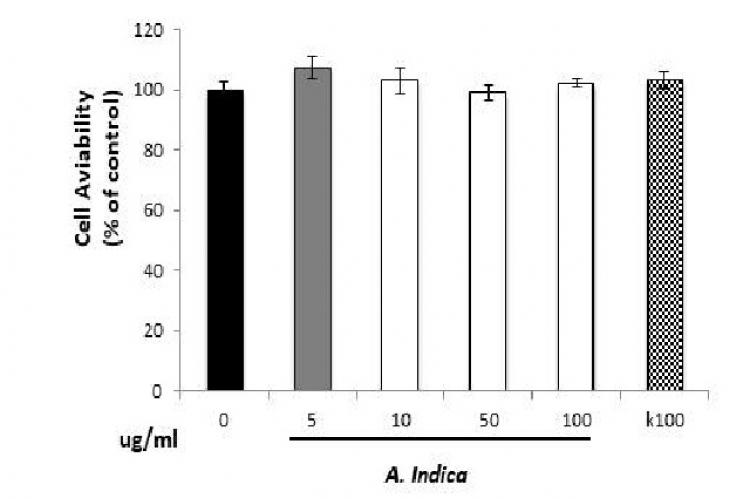 Effect of A.indica leaf extract and kojic acid on cell viability in B16F10 melanoma cells
