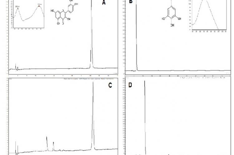 HPLC-UV chromatograms of quercetin (A), gallic acid (B), quercetin + ethyl acetate extracts of A. colubrina leaves (C) and gallic acid + ethyl acetate extracts of A. colubrina leaves (D). Detection at 340 nm.