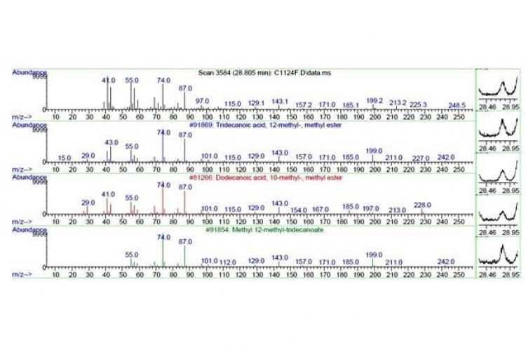GC-MS Spectrum of Indrakeeladri