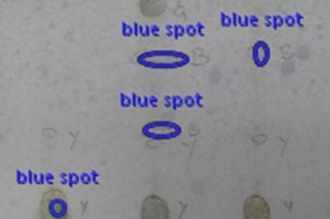 TLC Analysis of flavonoids using reagent.