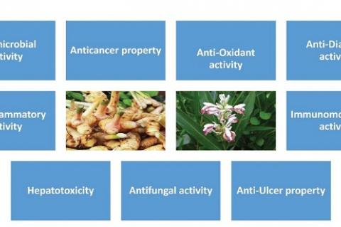Several pharmacological properties of Alpinia galanga