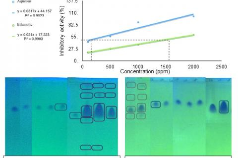 Thin layer chromatogram aqueous and ethanolic fractions.