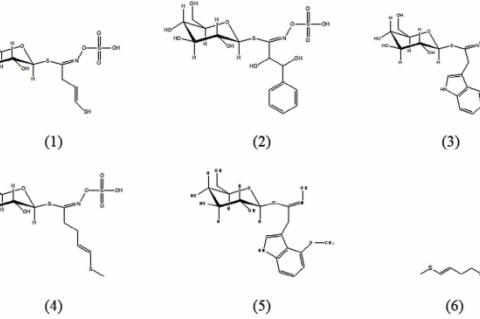 Chemical constituents found in R. sativus cultivars: sinigrin (1), 1,2-dihydroxy-2-phenylethylglucosinolate (2), 4 – hydroxyglucobrassicin (3), glucoraphasatin (4), 4-methoxyglucobrassicin (5), 4-methylthio-3-butenyl isothiocyanate (6).