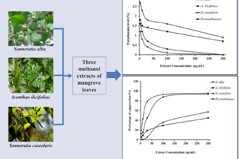 Antiplasmodial Activity of Methanolic Leaf Extract of Mangrove Plants against Plasmodium berghei