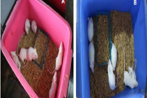 BALB/C mice used in this study. (a) BALB/c mice Before Grouping (b) BALB/c mice After Grouping B