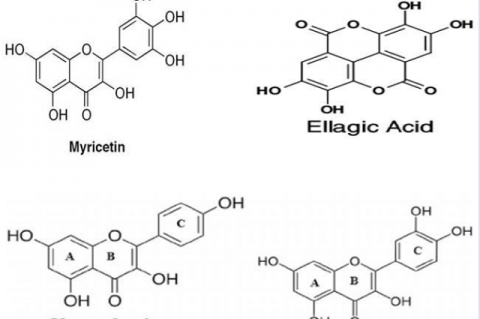 Chemical structures of the important bioactive molecules from Epilobium angustifolium.