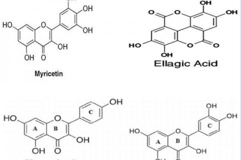Chemical structures of the important bioactive molecules from Epilobium angustifolium.