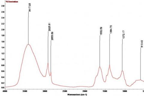 IR spectra of Paederia foetida stem extracts.