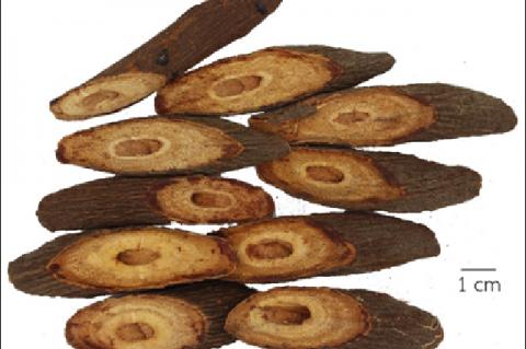 Derris elliptica dried stem crude drugs