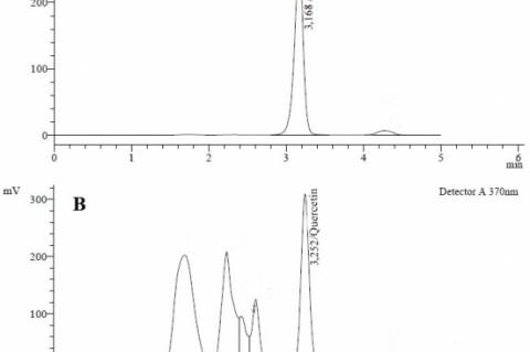 Chromatogram of quercetin standard (A) and M. malabathricum leave extract (B).