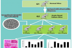 The Assay of Quercetin Solid Dispersion as a Potential Nephronprotector in Acute Renal Failure Induced Mice