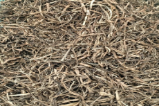 The Stem Bark Samples of R. nasutus